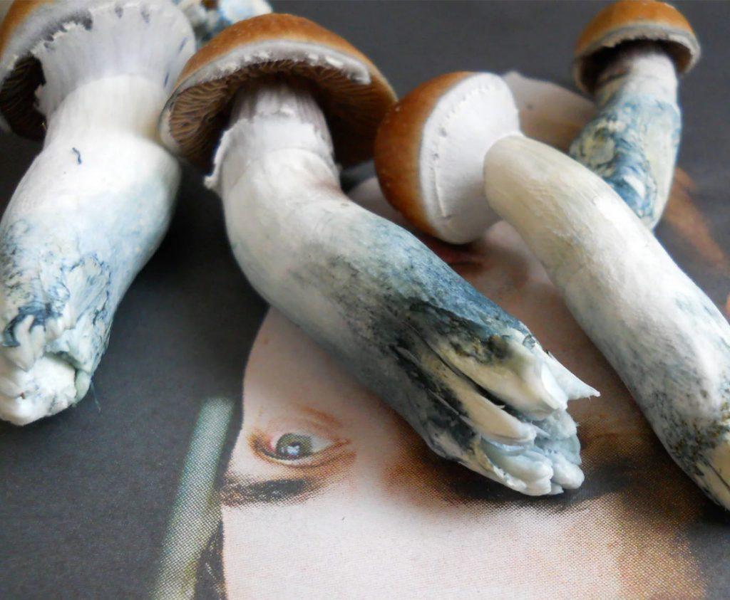 WHY MAGIC MUSHROOMS TURN BLUE
