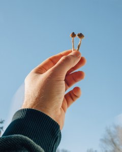 BREAKING NEWS: ONE PSILOCYBIN DOSE REPAIRS NEURONAL CONNECTION LOSS CAUSED BY DEPRESSION